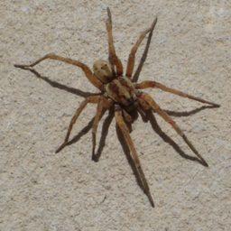 Уничтожение пауков в Тавде